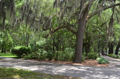 Willow Trees Reynolds Sq