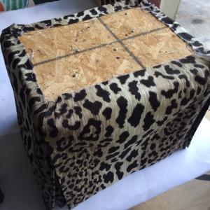 leopard bottom side