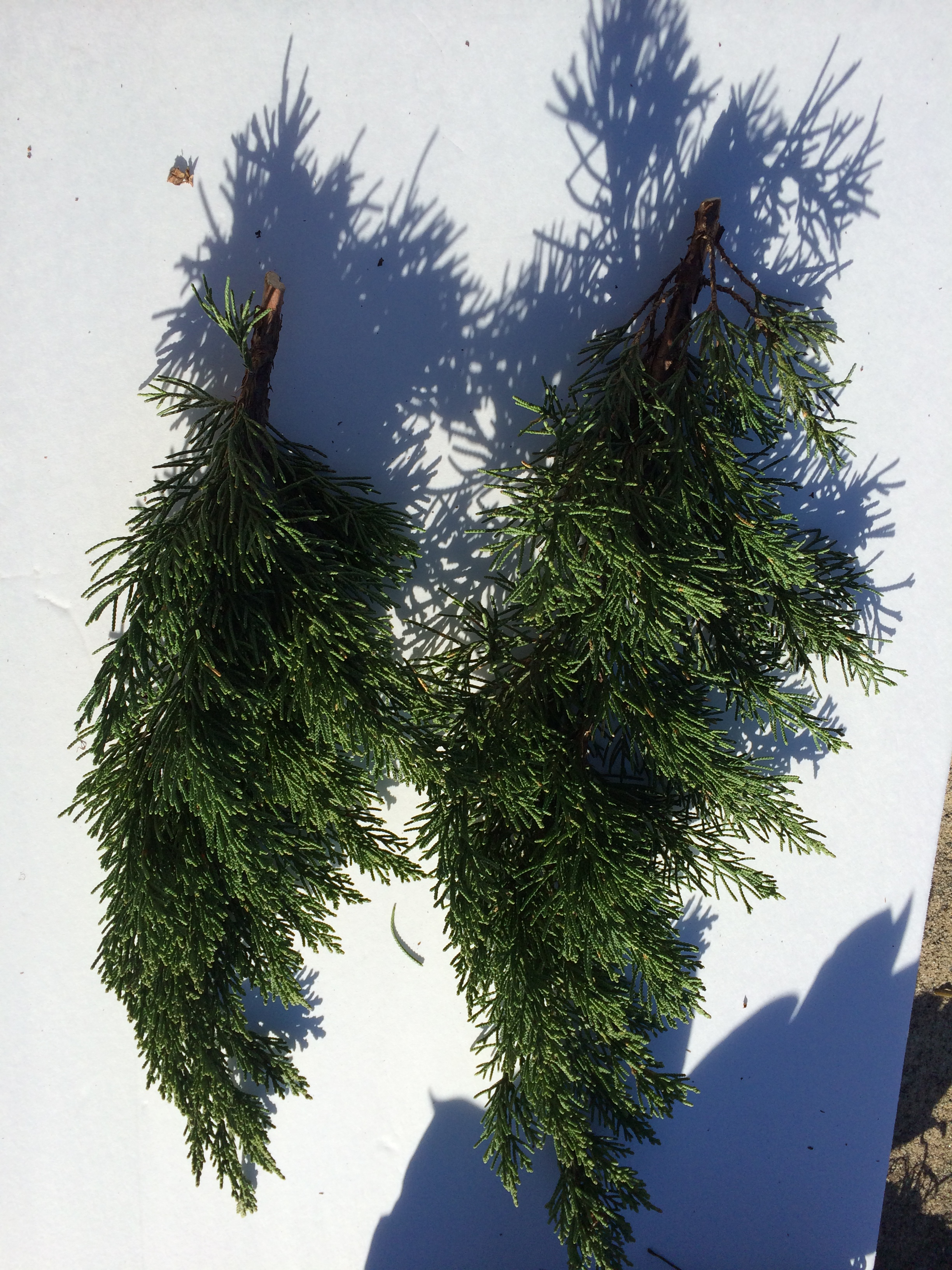 cedar branches how to make a swag - How To Make A Christmas Swag
