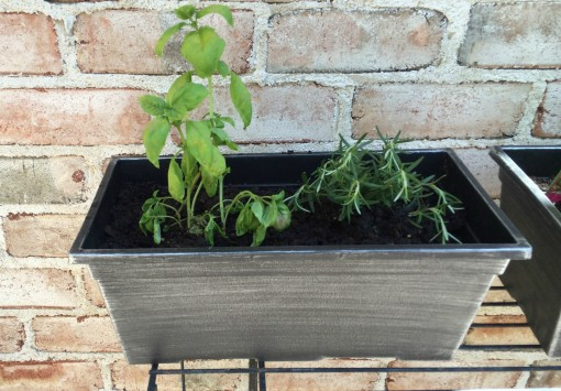 Herb Garden - Basil Rosemary