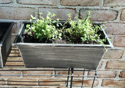 Herb Garden - Oregano thyme