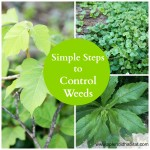 Got Weeds? Simple Steps To Rid Your Yard Of Common Weeds